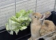 Jesle na seno, pro králíky, 17 x 13 cm