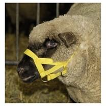 Ohlávka pro ovce a berany, nylon