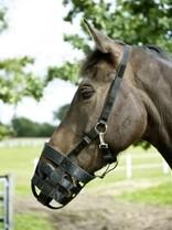 Náhubek pro koně BUSSE Easy nylon shetty, Velikost Pony