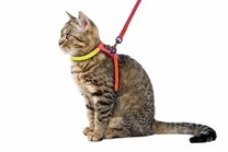 Postroj RAINBOW pro kočku s vodítkem